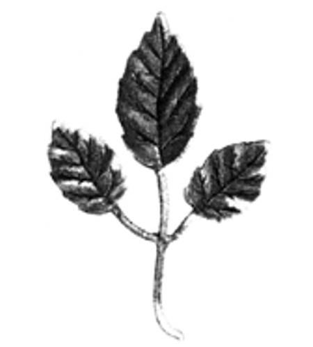 Ornament für Tore Blatt FRO 10